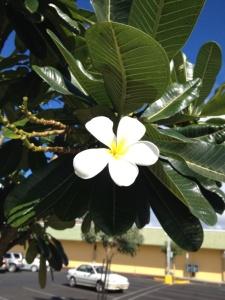 Hawaii56