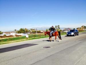 horse crossing road