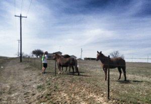 jup horses J